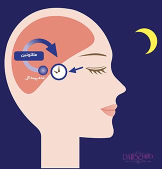 ملاتونین هورمون تاثیرگذار در بی خوابی و مهمترین جایگزین آن